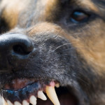 Tânăr atacat pe câmp de câinii unui fermier din localitatea Pănade