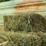 Tânăr din Valea Lungă cercetat penal după ce a sustras, de pe un teren agricol, fân în valoare de 1.000 de lei