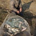 Trei pescari din Blaj care braconau prin greblare pe Târnava Mare s-au ales cu dosare penale