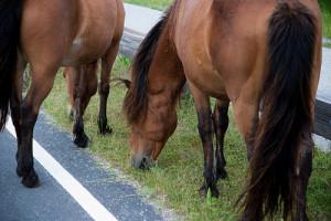cai-pe-marginea-drumului