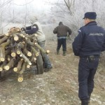 Bărbat de 42 de ani din Crăciunelu de Jos cercetat penal după ce a tăiat fără drept trei arbori