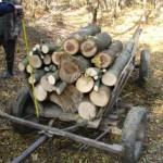 Bărbat din Blaj surprins în flagrant de jandarmi în timp ce fura lemne de foc din Pădurea Cărbunari