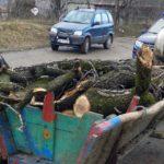 Căruţe încărcate cu lemn furat, oprite de jandarmii blăjeni