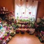 """""""Casa Florilor"""" și """"Maria"""", două florării crescute prin multă muncă și pasiune de o familie din Blaj"""