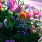 Obiceiuri, superstiţii și tradiții de Florii: Ramurile de salcie sunt așezate înainte de culcare sub pernele fetelor nemăritate | blajinfo.ro