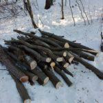 Tânăr de 29 de ani din Valea Lungă cercetat penal după ce a tăiat 218 arbori nemarcați