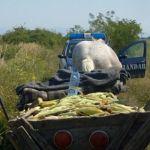 5 bărbați surprinși de jandarmi la Blaj cu o căruță plină de produse agricole furate de pe câmp