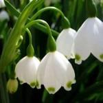 Mesaje de 1 martie 2016. Ce sms-uri, felicitări şi urări puteţi trimite cu ocazia venirii primăverii? | blajinfo.ro