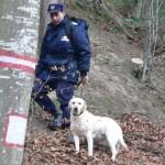 Tânăr din Cluj Napoca, rătăcit într-o pădure de lângă Sighişoara, găsit în timp util de polițiștii din Mureș