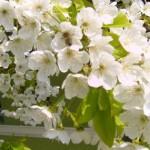 Mesaje de Florii 2014. SMS-uri, felicitări și urări de Sărbătoarea Floriilor | blajinfo.ro