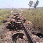 100 de oi, care se deplasau pe calea ferată, au fost spulberate de un tren Interregio, în județul Mureș