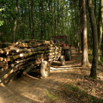 Un bărbat de 65 de ani a decedat după ce a fost strivit de remorca unui tractor într-o pădure de lângă Blaj