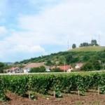 Cercetarea în viticultură se reîntoarce la organizarea din 1959